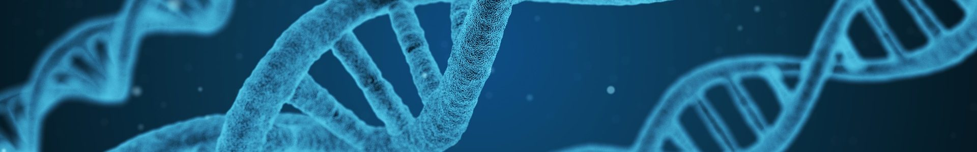 huntington's disease gene path